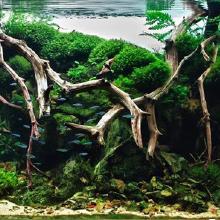 Mise à disposition d'aquarium paysagiste: L'esthétisme hautement travaillé